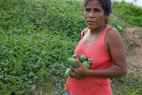 A Harvesting Hope member carrying squash from the organic farm