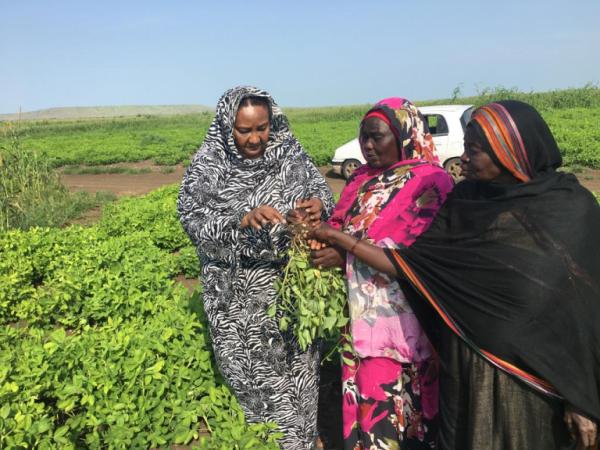 Fatima, founder of Zenab for Women in Development looking at crops with other members of the organization.